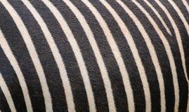 Zebra skin. Close up of a Zebra skin Royalty Free Stock Photography