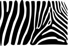 Zebra skin. A black and white zebra skin texture Stock Photos