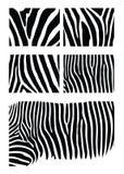 Zebra skin Royalty Free Stock Photography