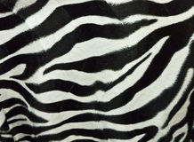 Zebra skin background. Texture of zebra skin black and white Stock Photo
