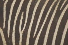 Zebra skin background Royalty Free Stock Photos
