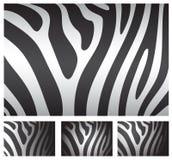 Zebra skin backgrounds Royalty Free Stock Photography