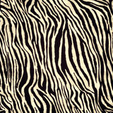Zebra skin pattern Royalty Free Stock Photo