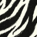 Zebra skin pattern background Stock Photography