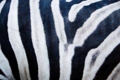 Zebra skin Stock Photo