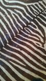 Zebra skin real look and feel Stock Images