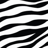 Zebra skin texture Stock Photo