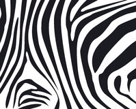 Zebra skin textured background Stock Images
