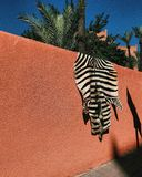 ZEBRA ON THE WALL IN MARRAKESH stock photography