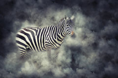 Zebra in smoke. Close up zebra in smoke on dark background Royalty Free Stock Photography