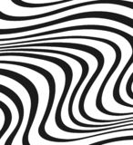 Zebra in square. White and black patern, lines wire Stock Photography