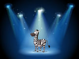 A zebra at the stage with spotlights Royalty Free Stock Images