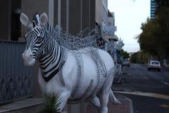 Zebra statica fotografie stock