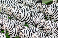 Zebra statues in Thailand Stock Image