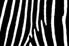Zebra-Streifen Lizenzfreies Stockbild