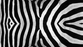 Zebra-Streifen Lizenzfreie Stockfotos