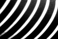 Zebra-Streifen Stockfotos