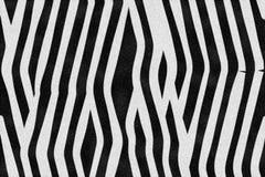 Zebra-Streifen Stockfotografie