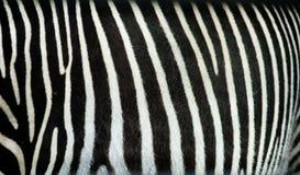 Zebra streift Beschaffenheit lizenzfreies stockfoto