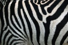 Zebra Strip. Zebra Stripes Pattern Texture Royalty Free Stock Photography