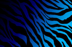 Zebra stripe contemporary art design gradient from dark purple to light blue background color Royalty Free Stock Images