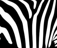 Zebra stripe pattern Stock Image