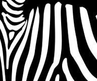 Zebra stripe pattern Royalty Free Stock Images
