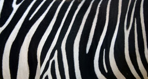 Zebra Stripes. Pattern Texture Royalty Free Stock Photo