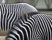 Zebra stripes Royalty Free Stock Photo