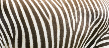 Zebra stripes Royalty Free Stock Images