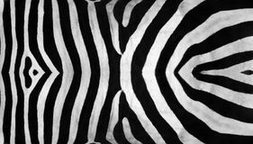 Zebra Stripes Royalty Free Stock Photos