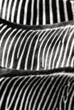 Zebra stripes abstract background Royalty Free Stock Photos