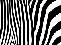 Zebra stripes background stock photo