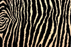 Zebra Stripes Fabric Pattern Royalty Free Stock Photography