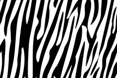 Zebra Stripes Seamless Pattern. Zebra pattern background Stock Images