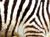 Zebra stripes up close Royalty Free Stock Photo