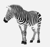 The zebra stripes Royalty Free Stock Photos