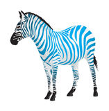 Zebra with strips of blue color. Stock Image