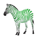 Zebra with strips of green color. Royalty Free Stock Photo
