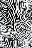 Zebra style fabric Stock Photography