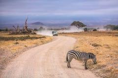 Zebra sulla strada Fotografia Stock Libera da Diritti