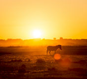Zebra Sunset Africa Stock Photos