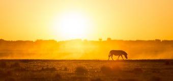 Zebra Sunset Africa Stock Photos