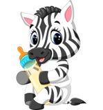 Zebra sveglia del bambino Fotografia Stock