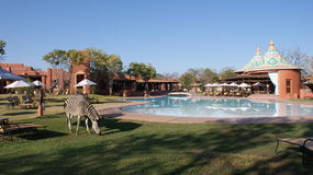 Zebra at the swimming pool near Victoria Falls. Zebra at the swimming pool of the Royal Livingstone Hotel in Zambia close to the famous Victoria Falls or Mosi-oa royalty free stock photos