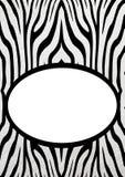 Zebra sztandar Zdjęcia Stock