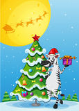 A zebra beside the tall christmas tree Stock Photos