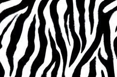 Zebra textile Royalty Free Stock Photos