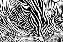 Zebra texture Royalty Free Stock Image