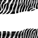 Zebra texture Stock Photo